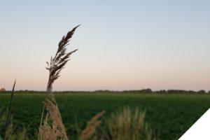 Marjon Bohré - Blog Waarom schuldgevoel gevaarlijk is