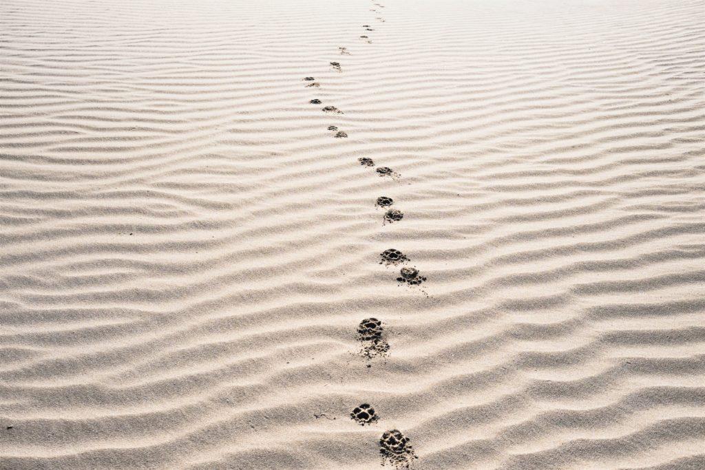 footsteps (2)