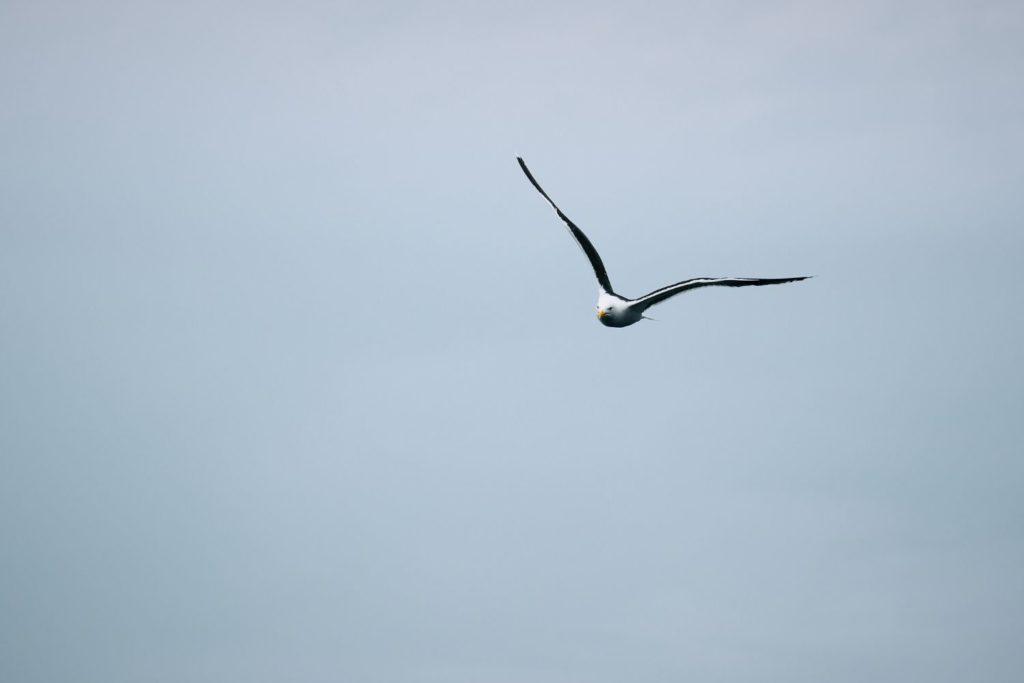 Marjon Bohré - vogel